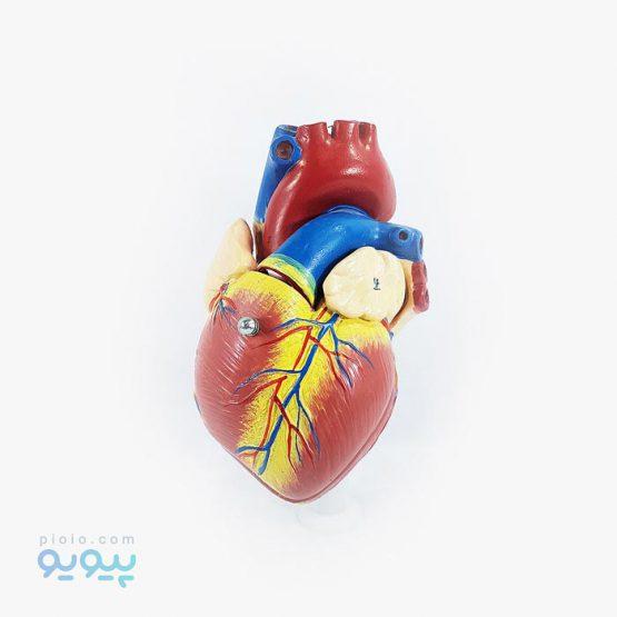 ماکت قلب