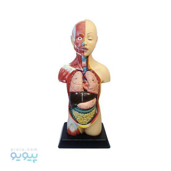 طرح مولاژ آناتومی بدن انسان مدل 6060
